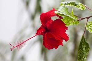 A brief guide to Menstruation (Haidh)